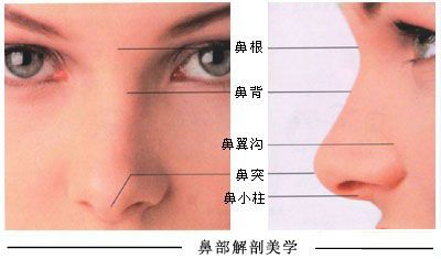 上海自体软骨隆鼻尖大概是多少钱